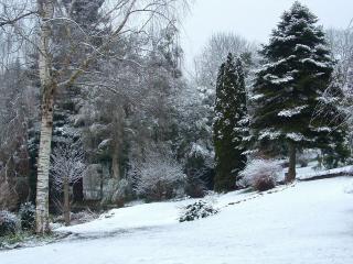 обои Дерeвья парка ранней зимою фото