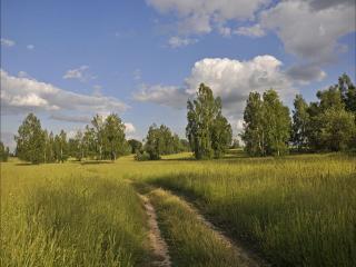 обои Дорога через поле меж берёз фото