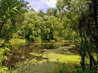 обои Зеленой сетью трав подернут летний пруд фото
