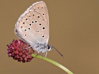 обои Маленькая бабочка на маленьком цветке фото