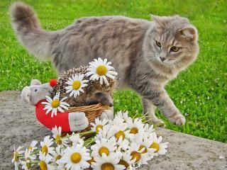 обои Ёжик и кот фото