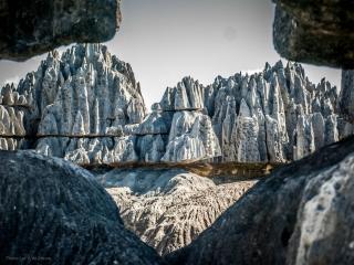 обои Каменный лес фото