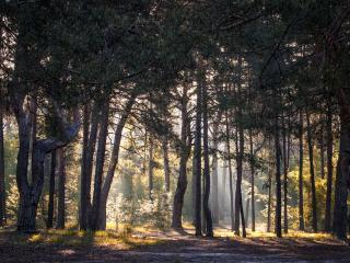 обои Утро в лесу фото