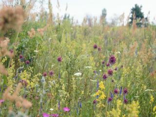 обои Цветы летнего поля фото