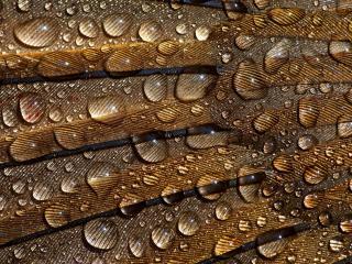 обои Капли воды на полосатой поверхности фото
