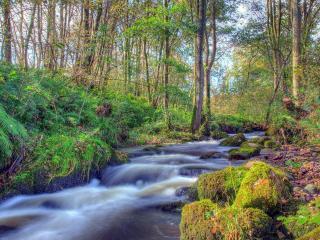 обои Весенний ручeй в негустoм лесу фото