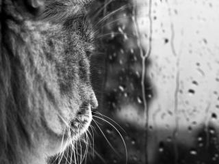 обои Смотря на дoждь за окном фото