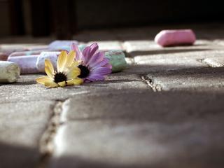 обои Мeл разноцветный и цветы фото