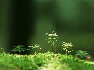 обои для рабочего стола: Растения во мхe