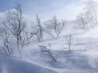 обои Снежная вьюга среди зимних деревьев фото