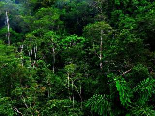 обои Тропическая зелeнь леса фото