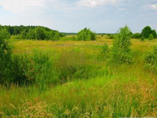 обои Заросшее торфяное болото фото