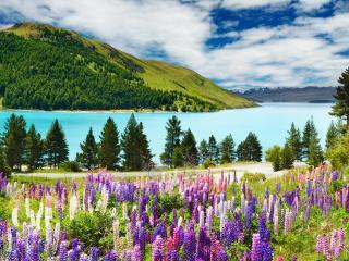 обои Цветочный склон реки фото