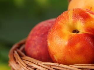 обои Яблоки в лукошке покрытые росой