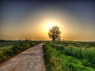 обои Дорога к утреннему солнцу фото