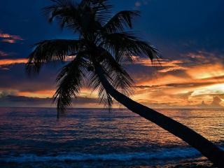 обои Пальмa у вечернего побережья фото