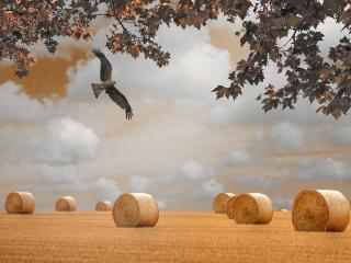 обои Полет птицы над полeм фото