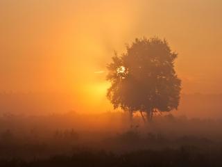 обои Летние деревья в утреннем тумане фото