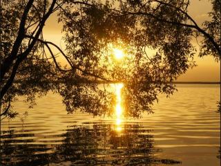обои Солнце висит в ветвях ивы, над рекой фото