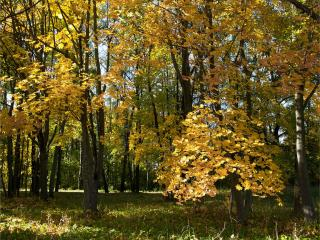 обои Танцует осень вальс-бостон в лесу фото