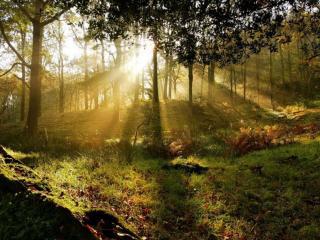 обои Лучи утреннего солнца в лесу фото