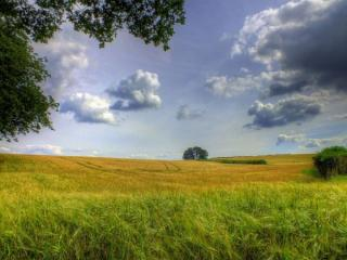 обои Русские пшеничные поля фото