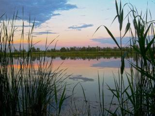 обои Июньский вечер на пруду фото