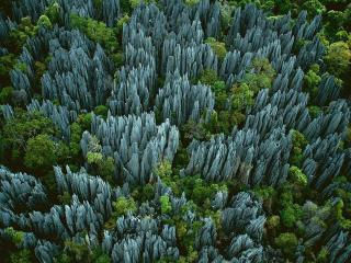 обои Каменный лес на Мадагаскаре фото