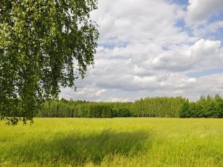 обои Летний пейзаж леса фото