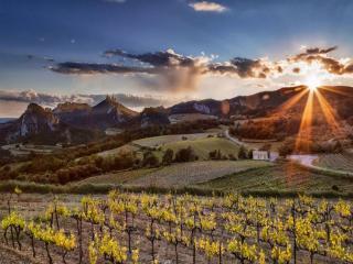 обои Осень на виноградных полях фото