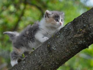обои Смелый котёнок фото