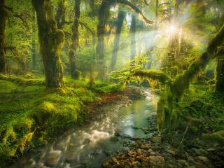 обои для рабочего стола: Солнце осветило старый лес и ручей