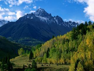 обои Зеленая долина у подножья горы фото