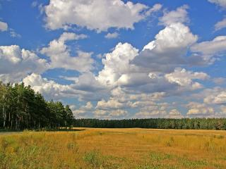 обои Лес,   поле,   облака фото