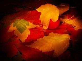 обои Осеннее ассорти фото