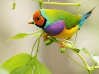 обои Маленькая разноцветная птичка фото