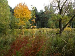 обои Начало осени у леса фото