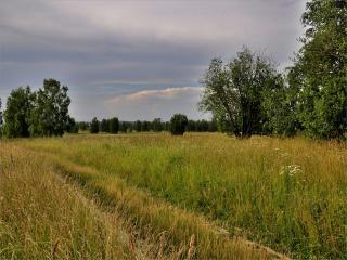 обои Среди некошенной травы фото