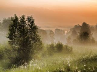 обои Утро летнее туманное фото