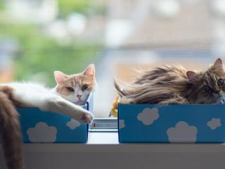 обои Котята в голубых коробочках фото