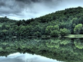 обои Сочная зелeнь леса у воды фото