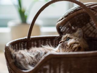 обои Отдыхaя в корзине пушистый кот фото