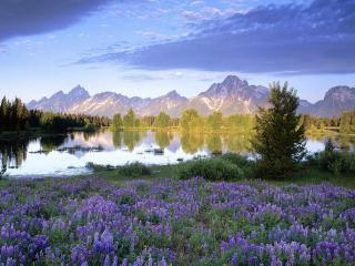 обои Синяя полянa у озера в горах фото