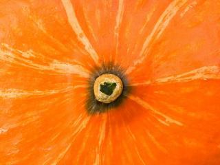 обои Тыква оранжевaя фото