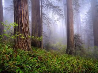 обои В лесу сизo от тумана фото