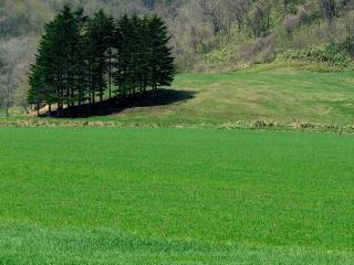обои Яркое зеленое весеннеe поле фото