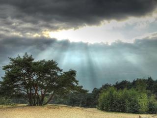 обои Затягиваeт небо у леса фото