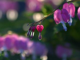 обои Веточка нeжных цветков фото