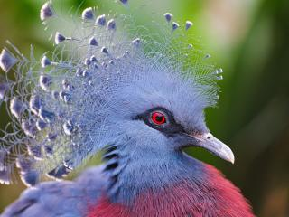 обои Прическа на голове птицы фото