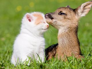обои Котенок с Бэмби на лужайке фото